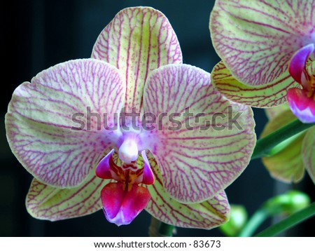 beautiful green purple orchid in a macro shot