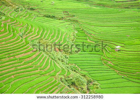 Beautiful green rice field terraced in Tule village, Vietnam