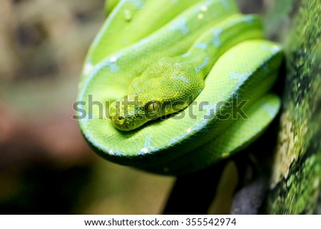 Beautiful green snake on the tree photographed close up - stock photo