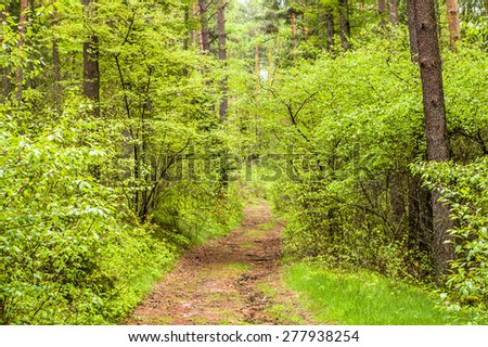 Beautiful green springtime forest landscape with fresh young leaves on branches, road among trees, nature background, landscape - stock photo