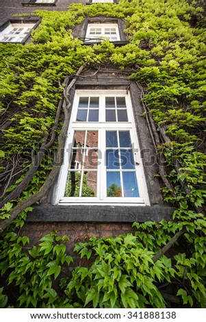 Beautiful green tree around small window on old building. Krakow, Poland, Europe.