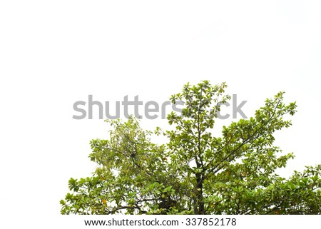 Beautiful green tree on a white background in high definition - stock photo