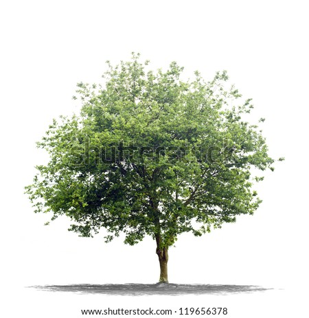 Beautiful green tree on a white background on high definition