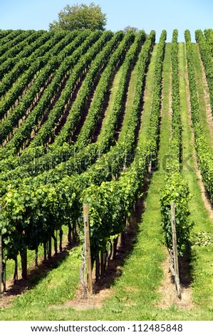 Beautiful, green vineyard on a little hill in Central Europe - stock photo