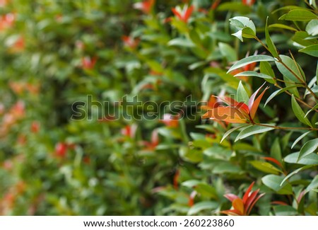 Beautiful green wall garden plants - stock photo
