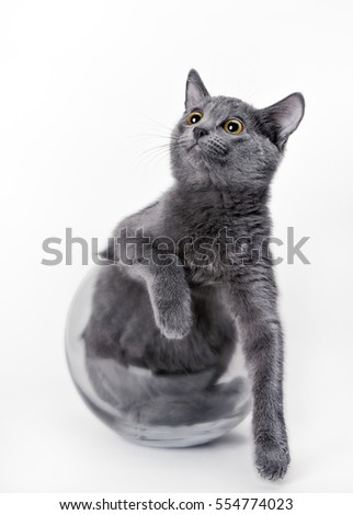 Beautiful Grey Cat Glass Vase On Stock Photo Royalty Free
