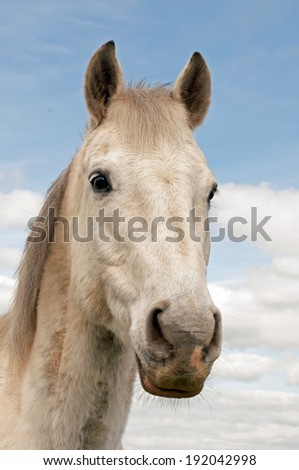 Beautiful grey horse posing - stock photo