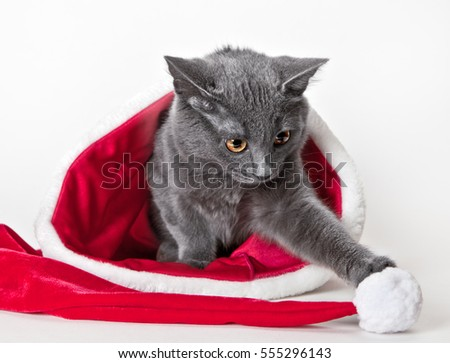 Beautiful grey kitten playing with Christmas cap