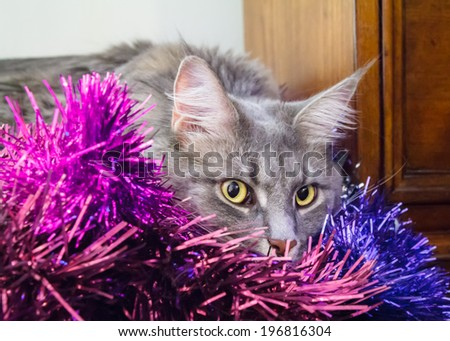 Beautiful grey tabby cat with large green eyes hiding in purple tinsel, ready for Christmas - stock photo