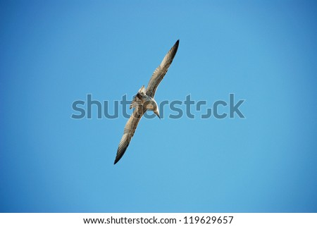 Beautiful gull on a background blue sky