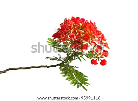 essay on gulmohar tree All just considering our really customized essay delivering professional services have fetched them not simply more advantageous levels than some may have managed.