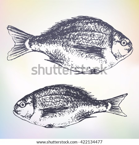 Beautiful hand drawn illustration with fish dorado, thick and thin