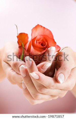 Beautiful hands with French manicure. Soft-focused, low DOF, focus on rose