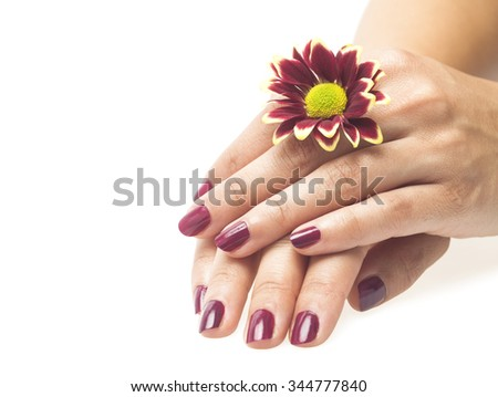 Beautiful hands with perfect nail manicure and red flower on a white background - stock photo