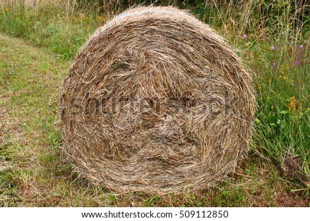 Beautiful hay bale on a green grass background