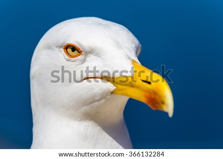 Beautiful Head Of Seagull With Blue Sky In The Background - stock photo