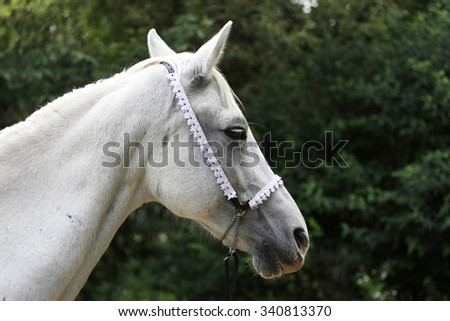 Beautiful head shot of an arabian horse on natural background - stock photo