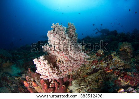 Beautiful healthy soft coral and reef at Nusa Penida, Indonesia.