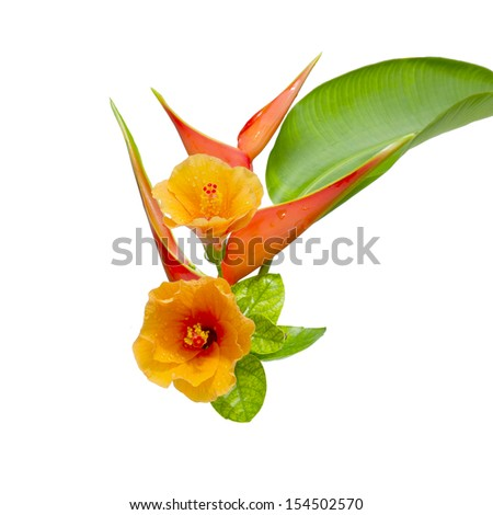 Beautiful Heliconia and Hibiscus flower. flower blooming on isolate white background. - stock photo
