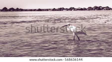 Beautiful Heron on the beach Black and White