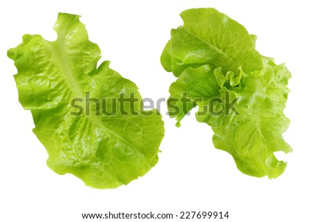 Beautiful Homegrown lettuce isolated on white background - stock photo