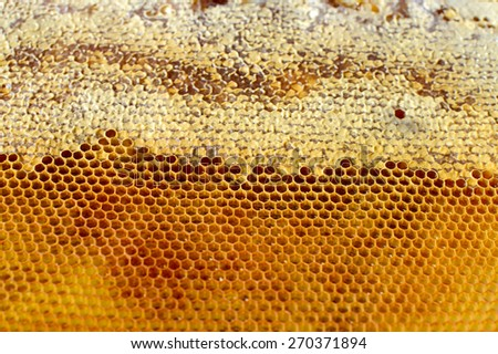 Beautiful honeycomb cells close-up with honey - stock photo