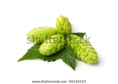 beautiful hop isolated on white - stock photo