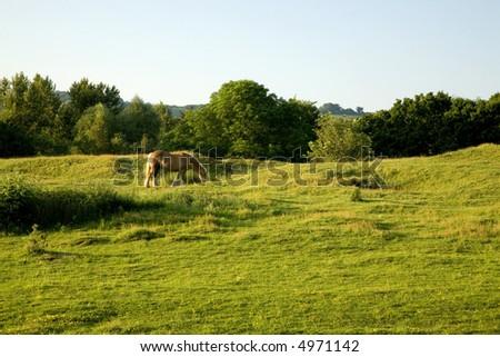 Beautiful Horse Grazing on Farmland in England - stock photo