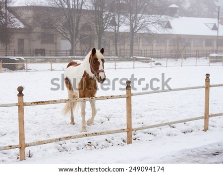 beautiful horse in the winter outdoors - stock photo