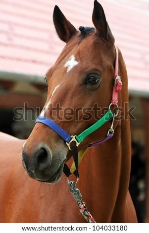 Beautiful horse looking - stock photo