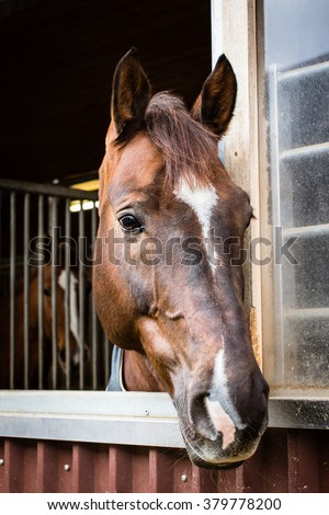 Beautiful horse looking out of the stable window, selective focus - stock photo