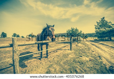 Beautiful horse on field or farm behind wooden fence, grazing, vintage country landscape - stock photo
