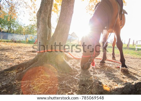Beautiful Horse on rural farm at sunset