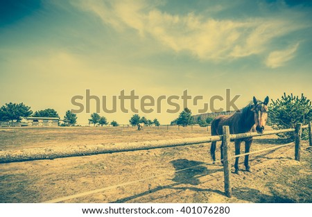 Beautiful horse on the field or farm behind wooden fence, vintage rural landscape - stock photo