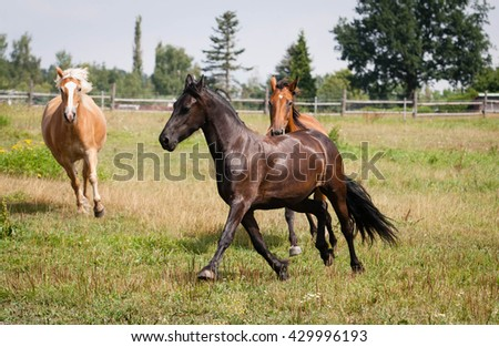 Beautiful horse outdoor on meadow.Western riding horse from farm.Horse with interesting color.Lovely and cute horse. Horse breed for western or jumping sport and training. Animal shot capturing horse.