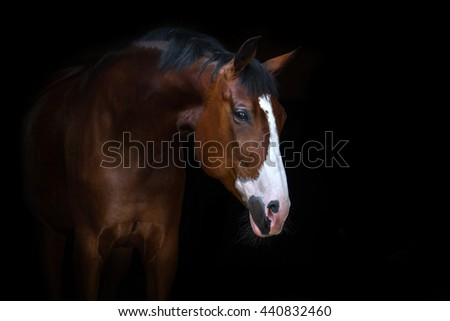 Beautiful horse portrait on black background