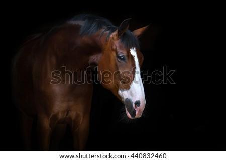 Beautiful horse portrait on black background - stock photo