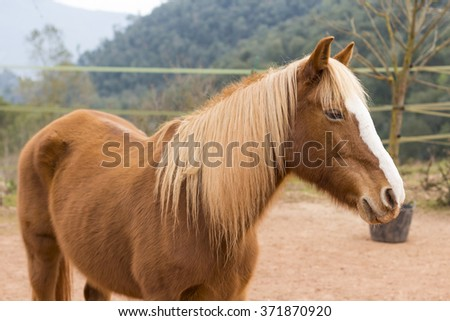 Beautiful horse portrait with blonde mane - stock photo