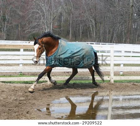 beautiful horse running - stock photo