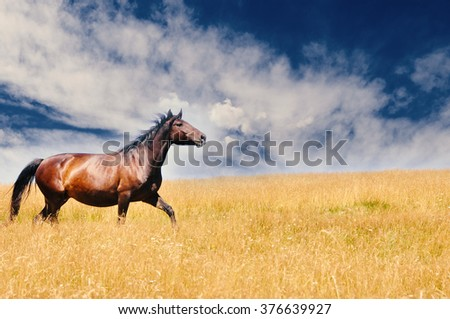Beautiful horse running