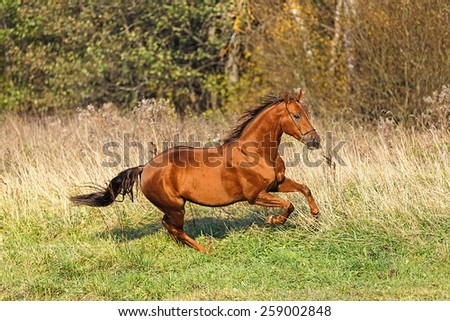 Beautiful horse running free in autumn landscape. - stock photo