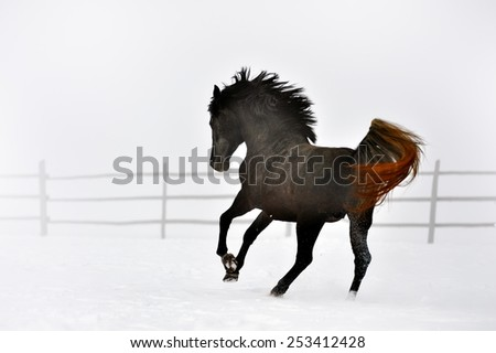 Beautiful horse running in winter - stock photo