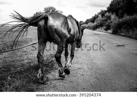 beautiful horse walking and grazing in a field near a road, summer in country side, black and white - stock photo