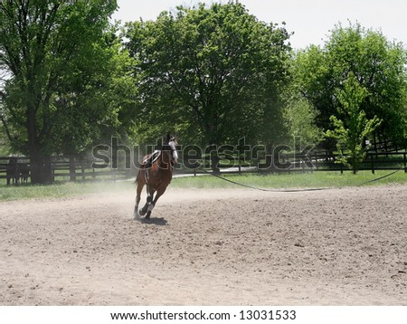 Beautiful horse warming up for jumping hurdles - stock photo