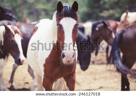 Beautiful horse with blue eyes in a horse farm. Equestrian ranch.  - stock photo