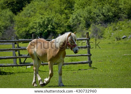 Beautiful horses on the green grass pasture