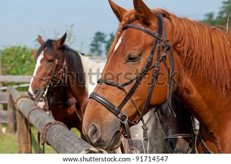 Beautiful horses, picture taken during the daytime.