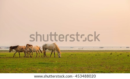 beautiful horses walking in the Meadow at sunset
