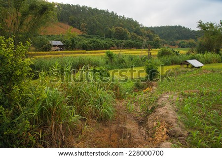 Beautiful hut & terraced rice on Mountain, Chiangmai Province, Northern of Thailand