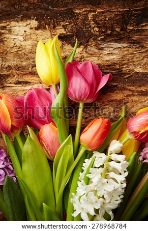 Beautiful hyacinths and tulips on bark tree background